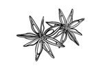 Anis 2 N-2