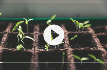 Vidéo Faire ses semis
