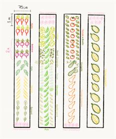 Plan de jardin_c