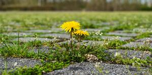 nature-grass-plant-field-lawn-meadow-1044246-pxhere.com