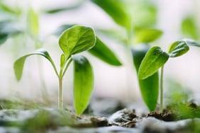 des plants en pleine croissance